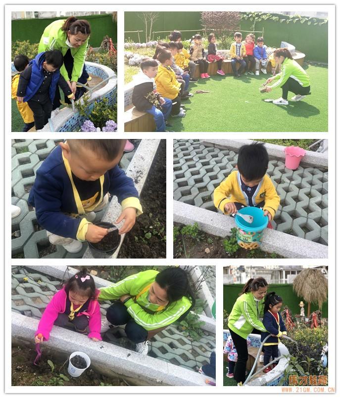 湖北武汉水岸星城伟才国际幼儿园:植一颗种子,育一颗大树