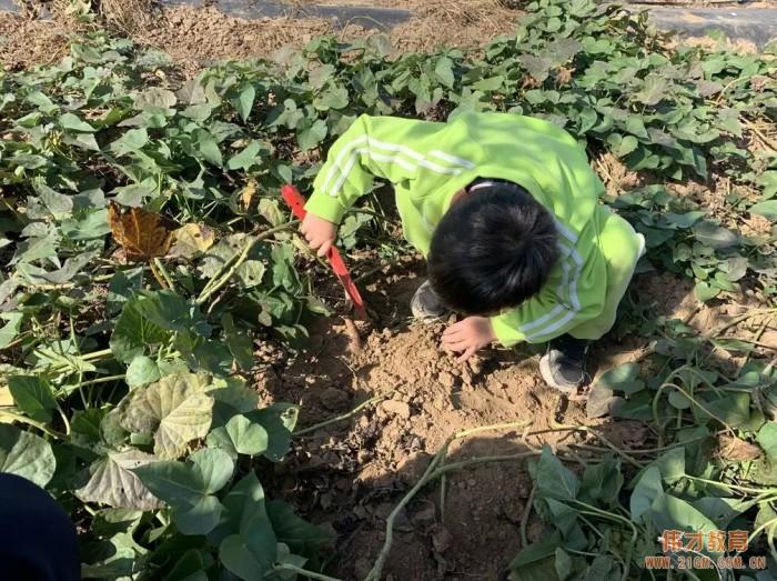 平顶山蓝湾翠园伟才幼儿园生态大课堂:耕道田园,探索秋天的奥秘