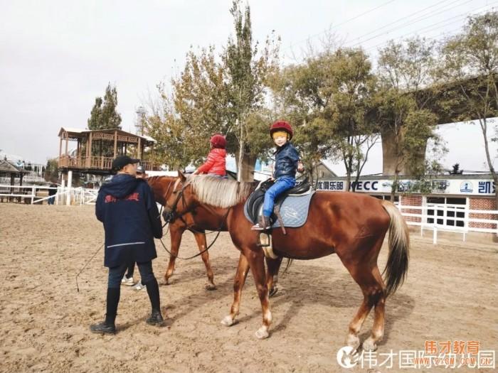 辽宁大连伟才幼儿园:马术课