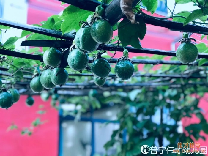 伟才生态课程:秋收冬藏,生根发芽丨广东普宁市伟才幼儿园